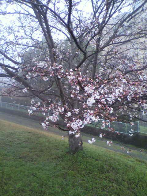 春なんだなぁ